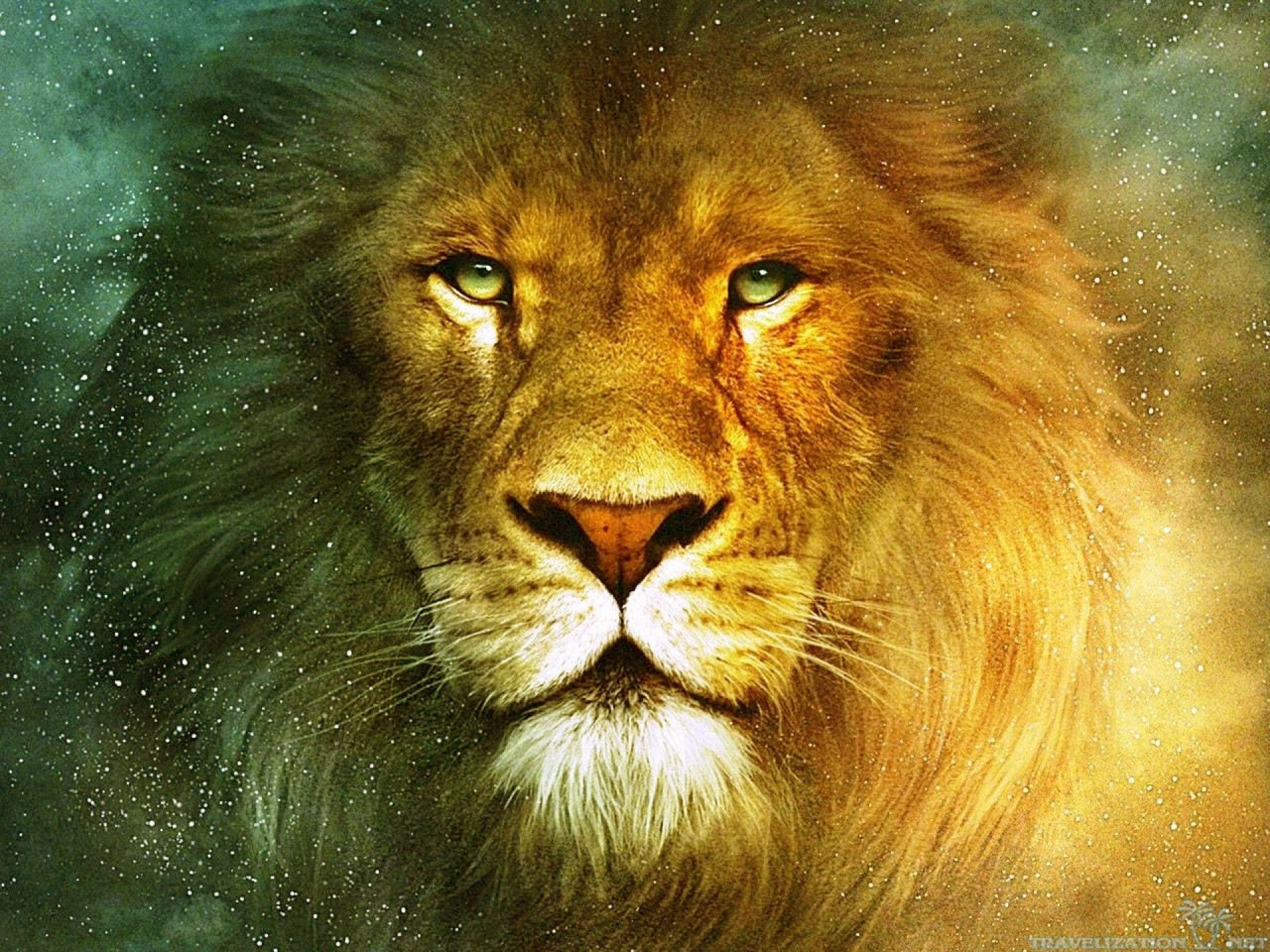 wallpaper android lion: Truly Beautiful Lion Wallpaper